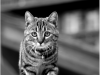 zermatt_katt1
